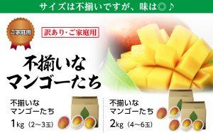 【訳あり】不揃いなマンゴーたち
