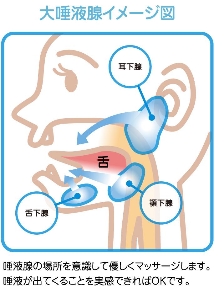 大唾液腺イメージ図
