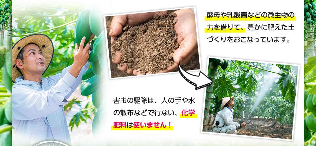 酵母や乳酸菌などの微生物の力を借りて、豊かに肥えた土づくりをおこなっています。 害虫の駆除は、人の手や水の散布などで行ない、化学肥料は使いません!