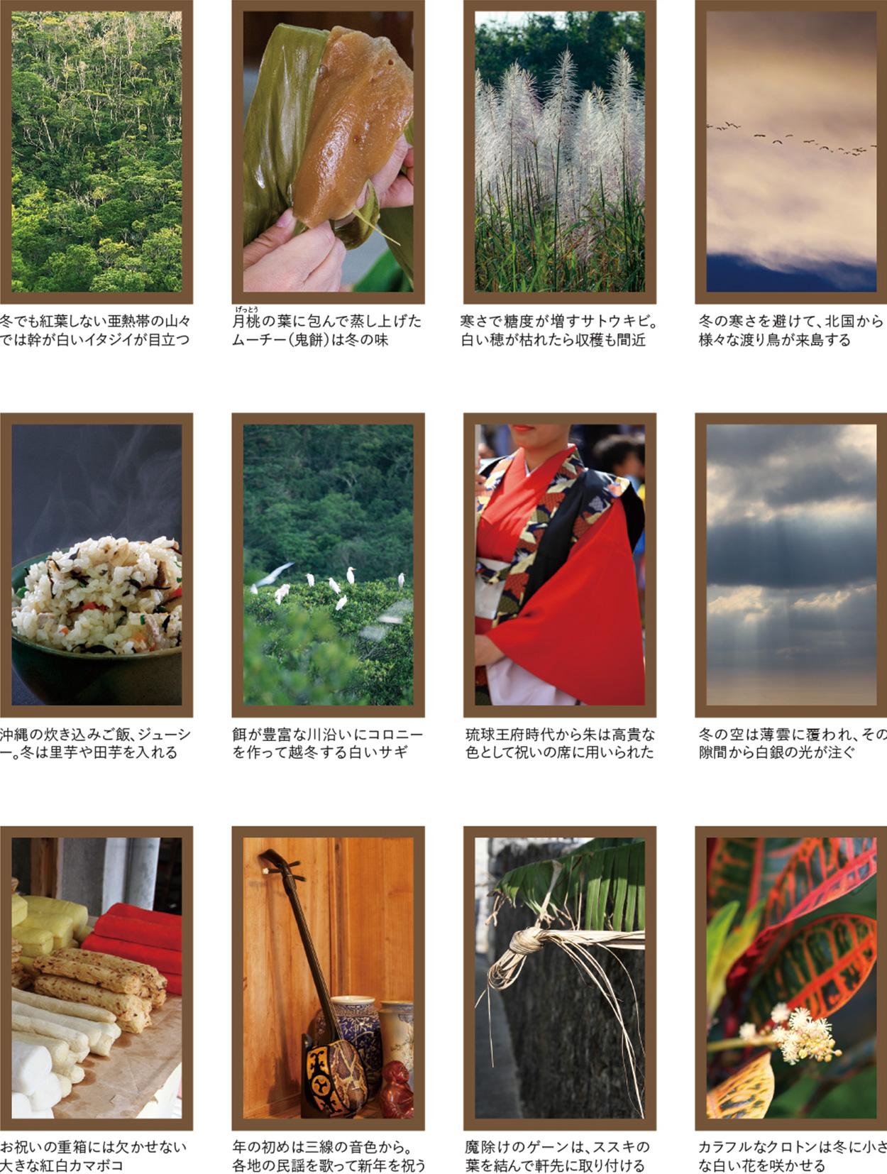 〜沖縄の四季彩美〜冬の色いろいろ