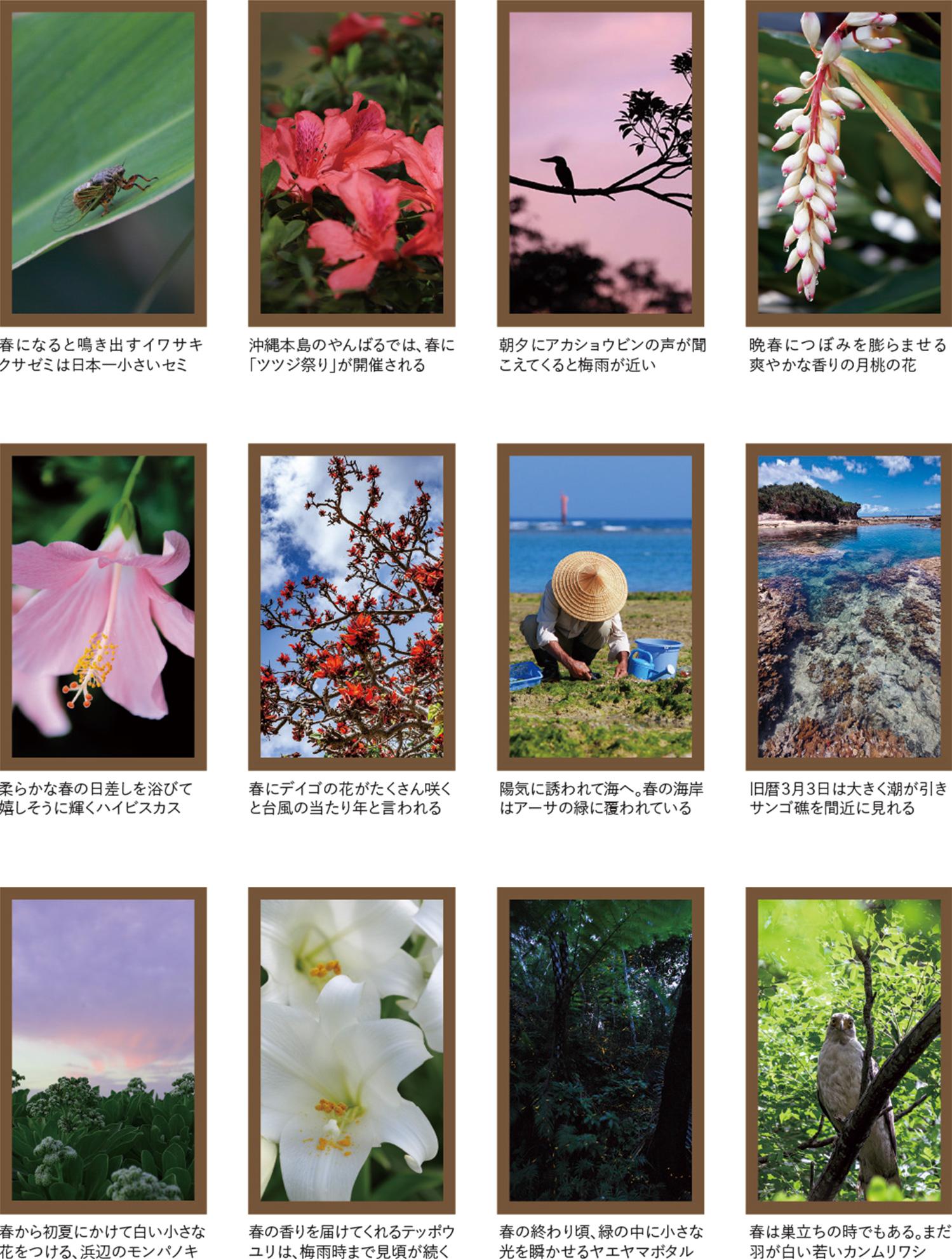 沖縄の四季彩美〜春の色〜