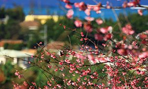 沖縄の四季彩美