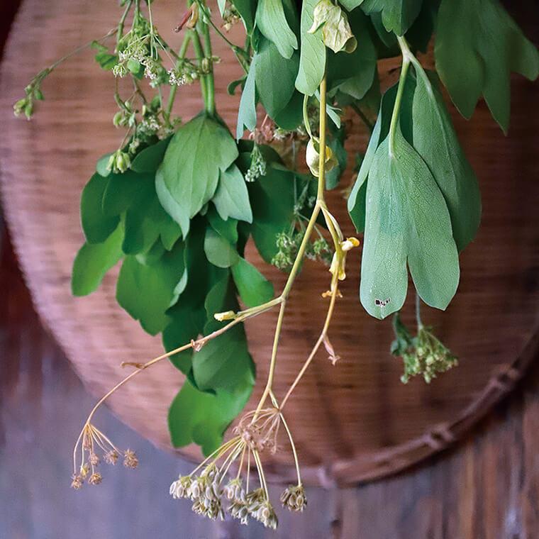 束ねた薬草は風通しの良い場所に吊るして乾燥させます。