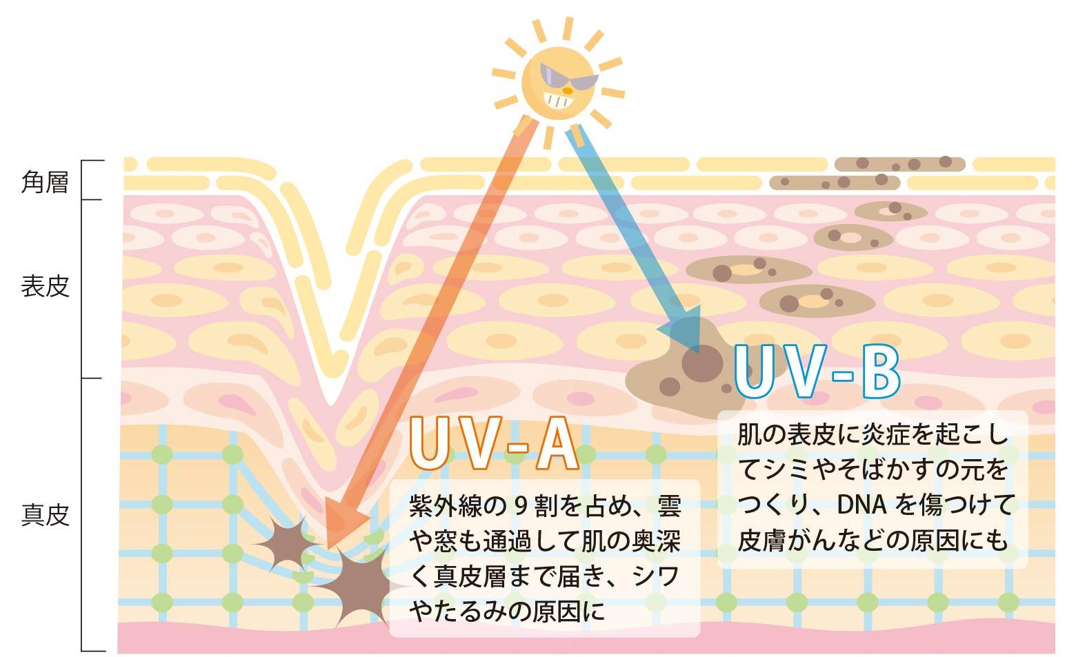 紫外線の種類と肌への影響