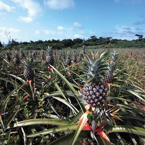 沖縄の薬草が大好きという伊江島出身のしまぶくろさんと、奄美大島出身のまきこさん。