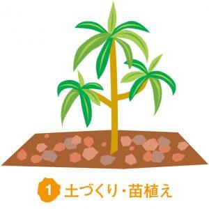 土づくり・苗植え
